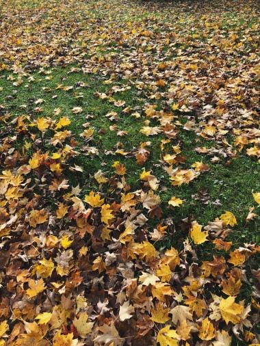 Favourite colour of Autumn