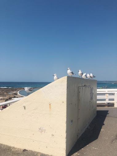 Seaside pals